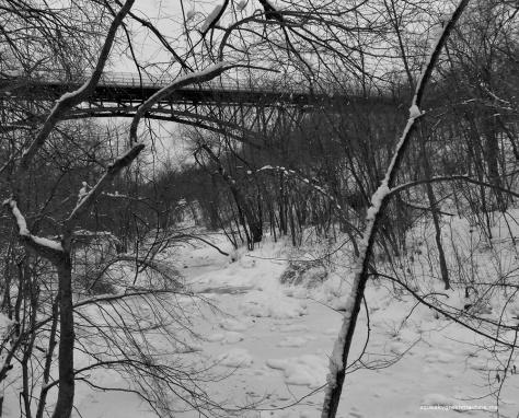 bridge and woods