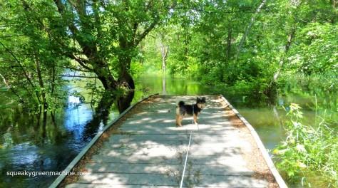 dog on bridge