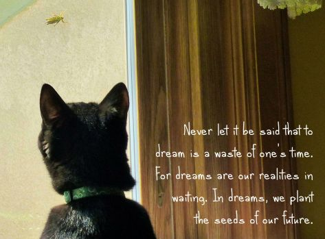 cat staring at grasshopper on the other side of window with the quote stating: Never let it be said that to dream is a waste of one's time. For dreams are our realities in waiting. In dreams, we plant the seeds of our future.