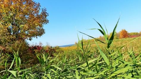 grassy views