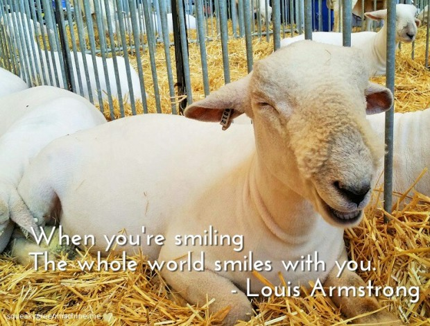 smiling sheep with louis armstrong quote when you're smiling the whole world smiles with you